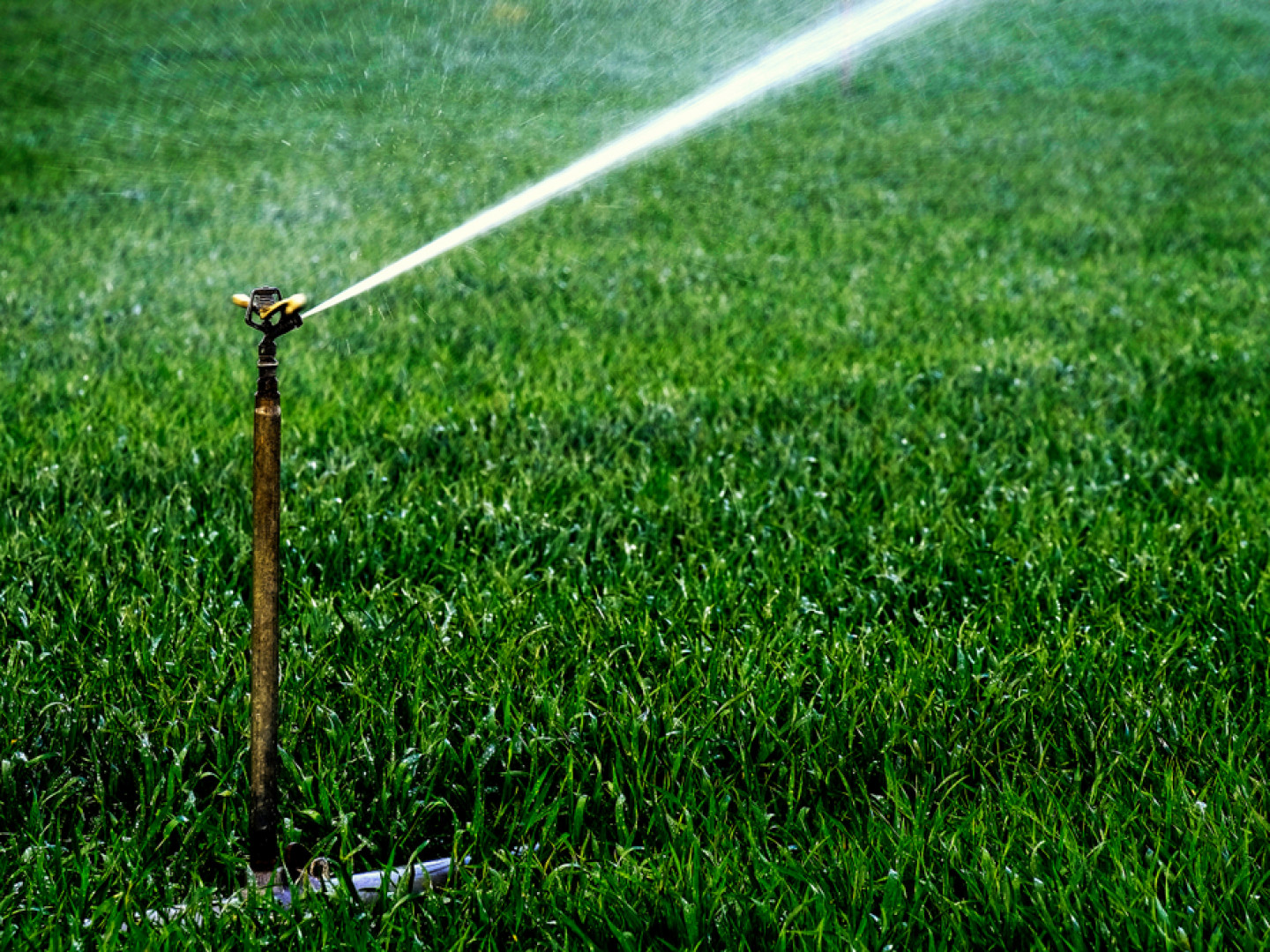 The Secret to a Green Lawn Is the Right Amount of Water